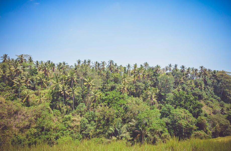 tropical punta cana